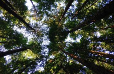 ESG - Richtlinien für Unternehmen aus der Sicht eines Investors